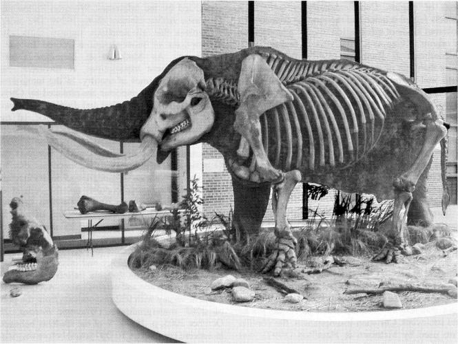 Perry Mastodon